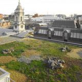 Green Roofing Bio-diverse Full System 100m2 Kit - Skygarden